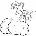 Obst und Gemuse 20