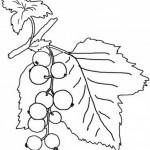 Obst und Gemuse 23
