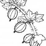 Obst und Gemuse 24