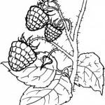 Obst und Gemuse 26