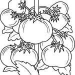 Obst und Gemuse 48