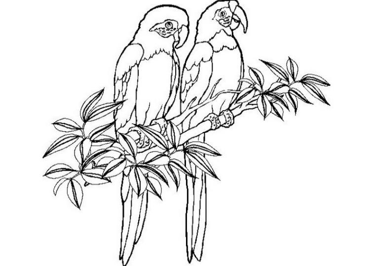ausmalbilder für kinder papagei 11