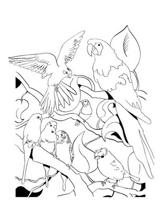 ausmalbilder für kinder papagei 3