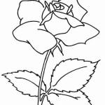 Rosen 8