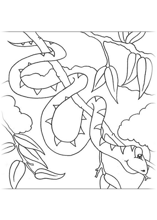 ausmalbilder für kinder schlange 5