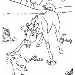 Spirit – Der wilde Mustang 10