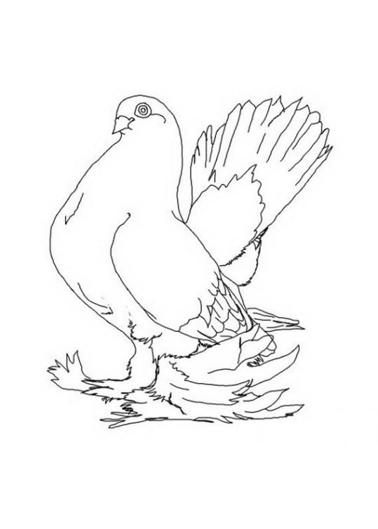 Ausmalbilder Für Kinder Taube 11