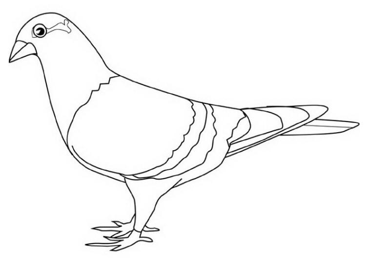 Ausmalbilder Für Kinder Taube 14