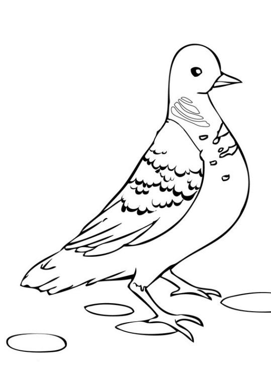 Ausmalbilder Für Kinder Taube 16