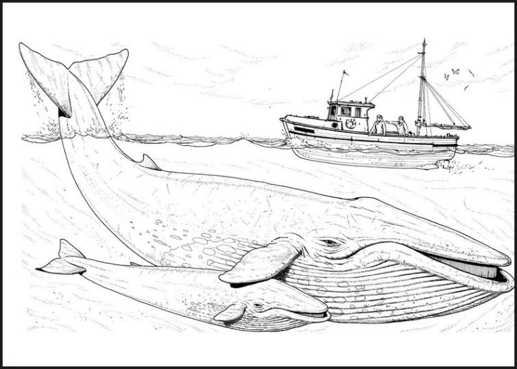 Ausmalbilder F 252 R Kinder Wal 13