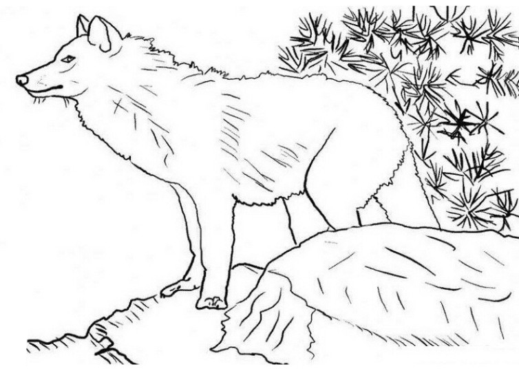 Ausmalbilder Fur Kinder Wolf 16