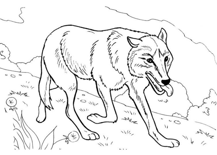 Wolf Ausmalbilder Malvorlagen Kostenlos Ausdrucken
