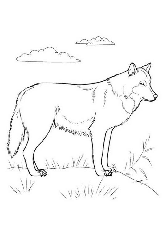 Ausmalbilder F 252 R Kinder Wolf 3