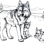 Wolf 7