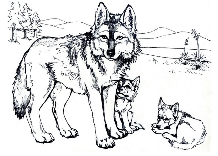 Ausmalbilder Für Kinder Wolf 7