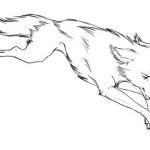 Wolf 9