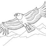 Adler 3