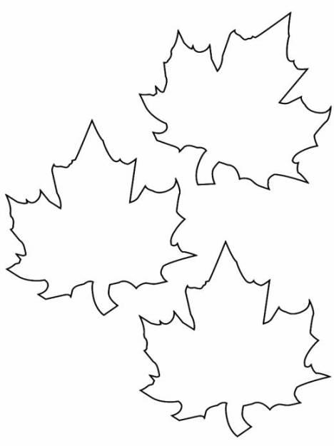 ausmalbilder für kinder ahornblatt 15