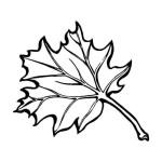 Ahornblatt 2