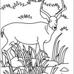 Antilope 13