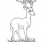 Antilope 14