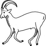 Antilope 15