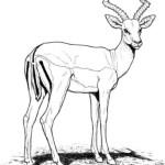 Antilope 16