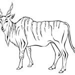 Antilope 2