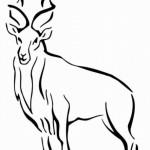 Antilope 3
