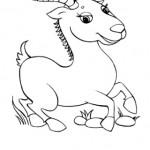 Antilope 8