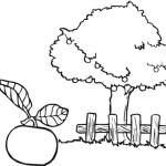 Apfelbaum 5
