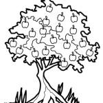 Apfelbaum 6