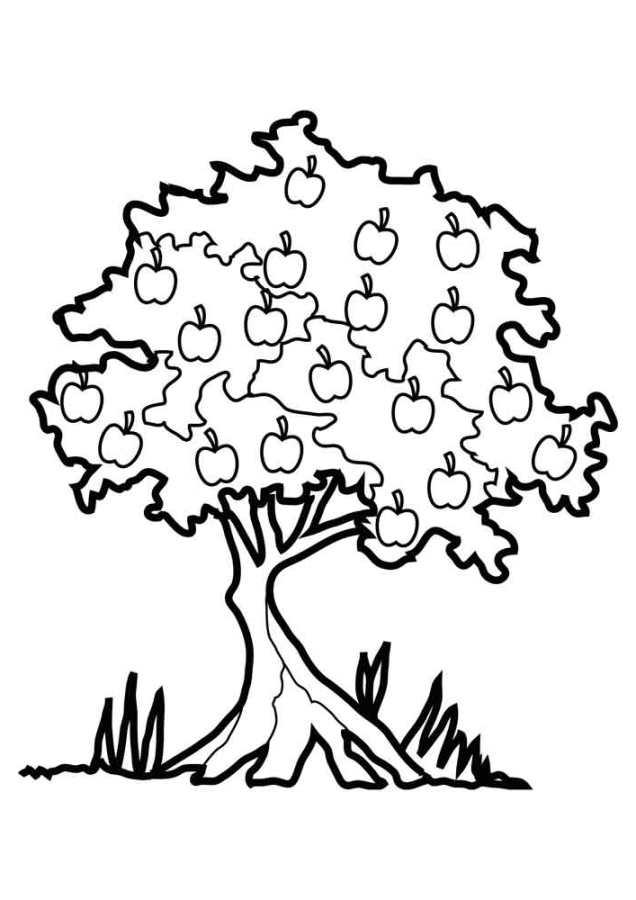 Ausmalbilder Für Kinder Apfelbaum 6