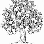 Apfelbaum 8