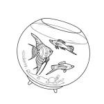 Aquariumfische 1