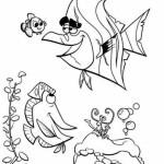 Aquariumfische 16