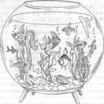 Aquariumfische 9