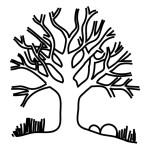 Baum 13