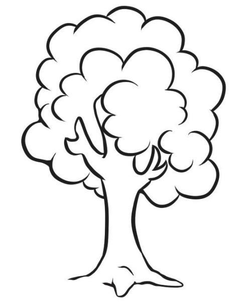 Baum 16