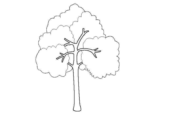 Baum 18