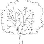 Baum 6