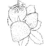 Erdbeere 23