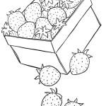 Erdbeere 33