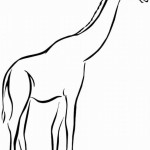 Giraffe 15