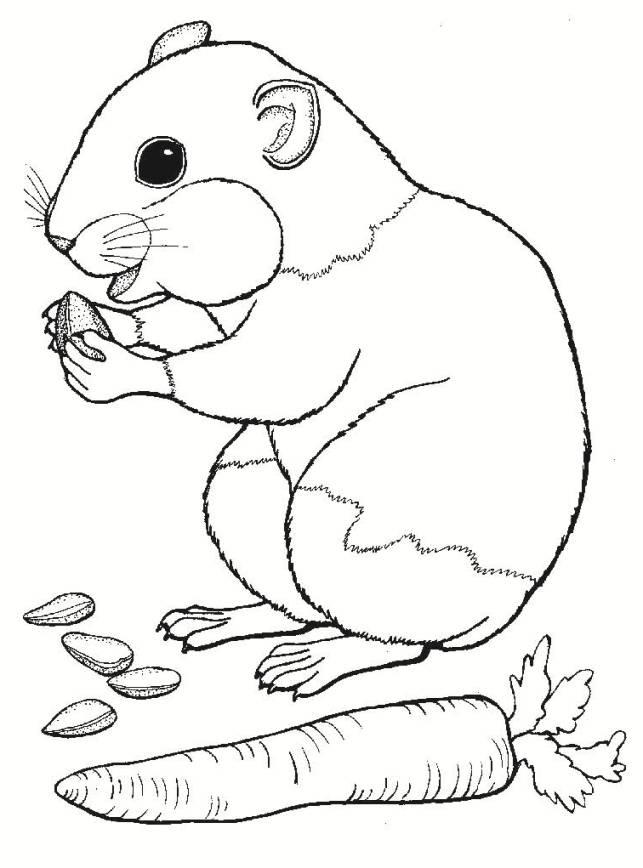 Ausmalbilder für Kinder Hamster 3