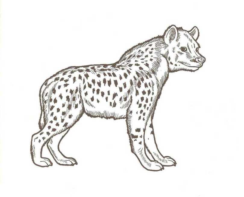 Hyane 3