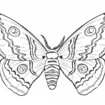 Insekten 10