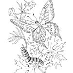 Insekten 13
