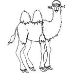 Kamel 13