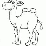 Kamel 5